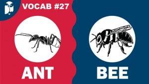 Lesson 27 Vocabulary
